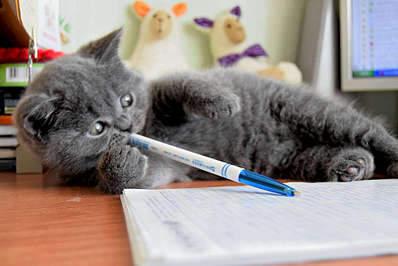 1920 X 1281 222.5 Kb 1920 X 1281 224.5 Kb 1920 X 1281 267.4 Kb 1920 X 1281 264.7 Kb Питомник британских кошек Cherry Berry's. Есть британские котята!