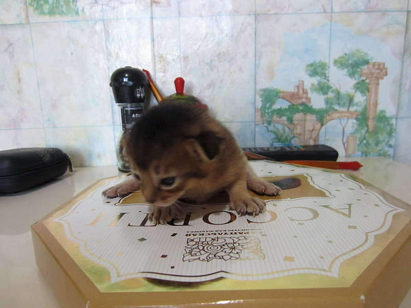1920 X 1440 154.1 Kb 1920 X 1440 159.2 Kb Веточка для Коржиков и абиссинских кошек