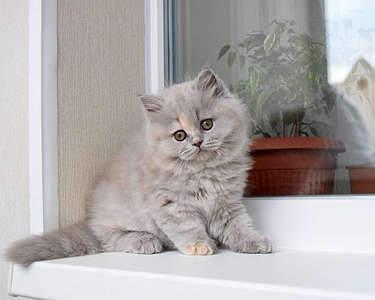 1920 X 1536 264.3 Kb 1920 X 1535 268.2 Kb Питомник британских кошек Cherry Berry's. Есть британские котята!