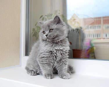 1920 X 1536 248.2 Kb Питомник британских кошек Cherry Berry's. Есть британские котята!