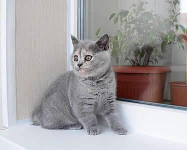 1920 X 1536 276.7 Kb 1920 X 1536 242.7 Kb Питомник британских кошек Cherry Berry's. Есть британские котята!