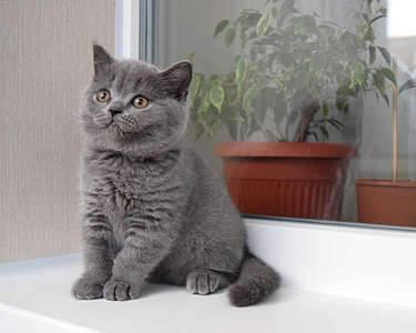 1920 X 1536 272.4 Kb Питомник британских кошек Cherry Berry's. Есть британские котята!
