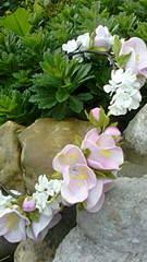 1296 X 2304 486.4 Kb Реалистичные цветы из фоамирана.Подарки и украшения ручной работы из фоамирана