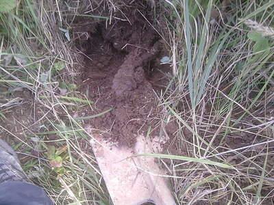 1280 X 960 825.1 Kb Кто хочет сьездить покопать?