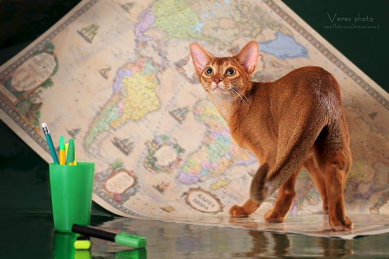 1600 X 1067 544.2 Kb Веточка для Коржиков и абиссинских кошек