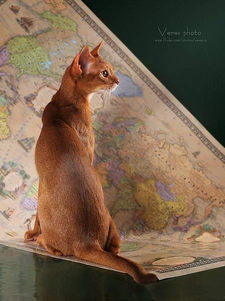 1200 X 1600 985.1 Kb 1600 X 1067 544.2 Kb Веточка для Коржиков и абиссинских кошек