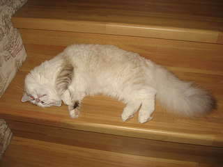 1920 X 1440 139.1 Kb 1920 X 1440 143.6 Kb 1920 X 2560 410.0 Kb Мишель, моя кошка. Кошка-Симошка.