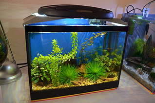 1920 X 1271 284.9 Kb 1920 X 1271 155.5 Kb Выставка аквариумов