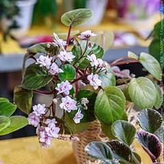640 X 640 95.5 Kb 640 X 640 98.4 Kb Выставка-продажа редких комнатных растений в Ижевске (3-4 октября, ТЦ ФЛАГМАН).