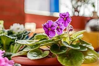 640 X 427 59.5 Kb 640 X 640 95.5 Kb 640 X 640 98.4 Kb Выставка-продажа редких комнатных растений в Ижевске (3-4 октября, ТЦ ФЛАГМАН).