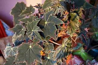 1280 X 852 224.8 Kb 1280 X 852 190.9 Kb Выставка-продажа редких комнатных растений в Ижевске (3-4 октября, ТЦ ФЛАГМАН).