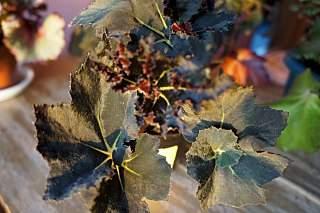 1280 X 852 205.1 Kb 1280 X 852 224.8 Kb 1280 X 852 190.9 Kb Выставка-продажа редких комнатных растений в Ижевске (3-4 октября, ТЦ ФЛАГМАН).