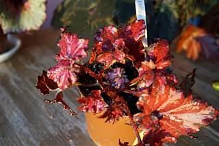1280 X 852 177.8 Kb 1280 X 852 179.5 Kb 1280 X 852 205.1 Kb 1280 X 852 224.8 Kb 1280 X 852 190.9 Kb Выставка-продажа редких комнатных растений в Ижевске (3-4 октября, ТЦ ФЛАГМАН).