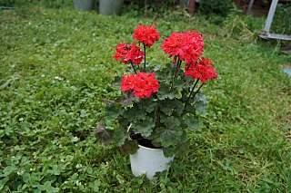 1280 X 852 237.7 Kb Выставка-продажа редких комнатных растений в Ижевске (3-4 октября, ТЦ ФЛАГМАН).