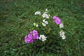 1280 X 852 248.7 Kb 1280 X 852 237.7 Kb Выставка-продажа редких комнатных растений в Ижевске (3-4 октября, ТЦ ФЛАГМАН).