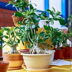 640 X 640 117.2 Kb 427 X 640 73.6 Kb Выставка-продажа редких комнатных растений в Ижевске (3-4 октября, ТЦ ФЛАГМАН).
