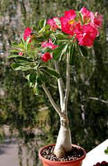 1920 X 2947 477.0 Kb 640 X 640 117.2 Kb 427 X 640 73.6 Kb Выставка-продажа редких комнатных растений в Ижевске (3-4 октября, ТЦ ФЛАГМАН).