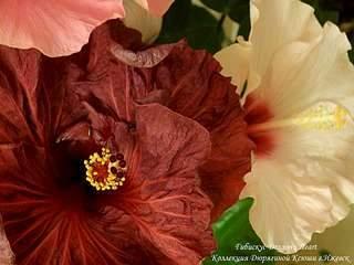 1920 X 1440 235.4 Kb 1920 X 2560 271.1 Kb 1920 X 1440 158.2 Kb 1080 X 1440 125.6 Kb Выставка-продажа редких комнатных растений в Ижевске (3-4 октября, ТЦ ФЛАГМАН).