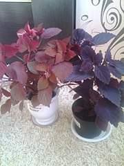 768 X 1024 158.6 Kb 768 X 1024 195.1 Kb 768 X 1024 156.6 Kb Выставка-продажа редких комнатных растений в Ижевске (3-4 октября, ТЦ ФЛАГМАН).