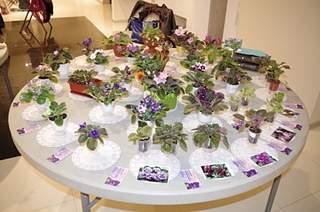 448 X 297 162.7 Kb Выставка-продажа редких комнатных растений в Ижевске (3-4 октября, ТЦ ФЛАГМАН).