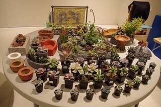 448 X 297 164.5 Kb 448 X 297 162.7 Kb Выставка-продажа редких комнатных растений в Ижевске (3-4 октября, ТЦ ФЛАГМАН).