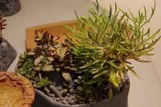 448 X 297 163.4 Kb 448 X 297 164.5 Kb 448 X 297 162.7 Kb Выставка-продажа редких комнатных растений в Ижевске (3-4 октября, ТЦ ФЛАГМАН).