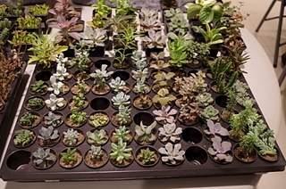 448 X 297 188.7 Kb 297 X 448 148.6 Kb 448 X 297 163.4 Kb 448 X 297 164.5 Kb 448 X 297 162.7 Kb Выставка-продажа редких комнатных растений в Ижевске (3-4 октября, ТЦ ФЛАГМАН).
