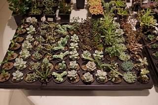 448 X 297 165.2 Kb Выставка-продажа редких комнатных растений в Ижевске (3-4 октября, ТЦ ФЛАГМАН).