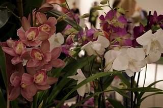 448 X 297 165.0 Kb 448 X 297 150.8 Kb 448 X 297 165.2 Kb Выставка-продажа редких комнатных растений в Ижевске (3-4 октября, ТЦ ФЛАГМАН).