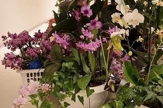 448 X 297 155.2 Kb 448 X 297 165.0 Kb 448 X 297 150.8 Kb 448 X 297 165.2 Kb Выставка-продажа редких комнатных растений в Ижевске (3-4 октября, ТЦ ФЛАГМАН).