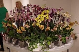 448 X 297 172.2 Kb 448 X 297 155.2 Kb 448 X 297 165.0 Kb 448 X 297 150.8 Kb 448 X 297 165.2 Kb Выставка-продажа редких комнатных растений в Ижевске (3-4 октября, ТЦ ФЛАГМАН).