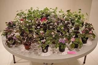448 X 297 158.0 Kb Выставка-продажа редких комнатных растений в Ижевске (3-4 октября, ТЦ ФЛАГМАН).