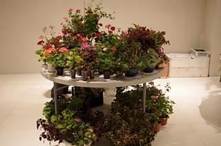 448 X 297 160.6 Kb Выставка-продажа редких комнатных растений в Ижевске (3-4 октября, ТЦ ФЛАГМАН).