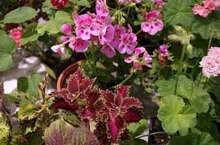 448 X 297 177.1 Kb 448 X 297 166.3 Kb 448 X 297 160.6 Kb Выставка-продажа редких комнатных растений в Ижевске (3-4 октября, ТЦ ФЛАГМАН).