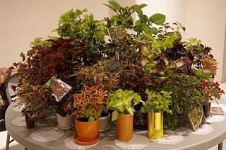 448 X 297 156.4 Kb Выставка-продажа редких комнатных растений в Ижевске (3-4 октября, ТЦ ФЛАГМАН).