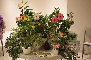 448 X 297 160.7 Kb 448 X 297 150.1 Kb 448 X 297 137.0 Kb 448 X 297 165.9 Kb 448 X 297 156.4 Kb Выставка-продажа редких комнатных растений в Ижевске (3-4 октября, ТЦ ФЛАГМАН).