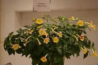 448 X 297 154.2 Kb 448 X 297 144.8 Kb 448 X 297 128.3 Kb 448 X 297 136.5 Kb 448 X 297 140.8 Kb Выставка-продажа редких комнатных растений в Ижевске (3-4 октября, ТЦ ФЛАГМАН).