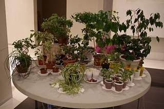 448 X 297 158.2 Kb 448 X 297 122.2 Kb 448 X 297 123.9 Kb Выставка-продажа редких комнатных растений в Ижевске (3-4 октября, ТЦ ФЛАГМАН).