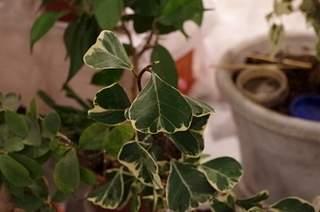 448 X 297 130.1 Kb 448 X 297 158.2 Kb 448 X 297 122.2 Kb 448 X 297 123.9 Kb Выставка-продажа редких комнатных растений в Ижевске (3-4 октября, ТЦ ФЛАГМАН).