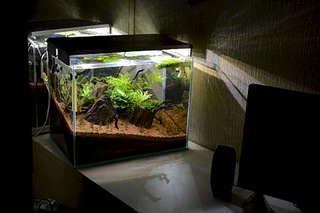 1920 X 1280 199.9 Kb Какой у вас аквариум?
