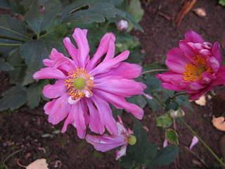 1920 X 1440 171.9 Kb Цветы