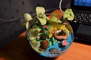 1920 X 1271 214.5 Kb 1920 X 1271 206.2 Kb 'Сад в стекле'. Композиции из растений.