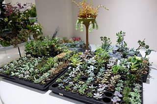 1920 X 1280 314.1 Kb Выставка-продажа редких комнатных растений в Ижевске (3-4 октября, ТЦ ФЛАГМАН).