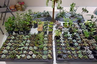 1920 X 1280 387.2 Kb 1920 X 1280 314.1 Kb Выставка-продажа редких комнатных растений в Ижевске (3-4 октября, ТЦ ФЛАГМАН).