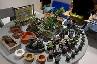 1920 X 1280 290.3 Kb 1920 X 1280 387.2 Kb 1920 X 1280 314.1 Kb Выставка-продажа редких комнатных растений в Ижевске (3-4 октября, ТЦ ФЛАГМАН).