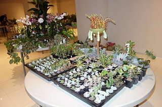 1920 X 1280 303.6 Kb 1920 X 1280 290.3 Kb 1920 X 1280 387.2 Kb 1920 X 1280 314.1 Kb Выставка-продажа редких комнатных растений в Ижевске (3-4 октября, ТЦ ФЛАГМАН).