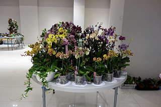 1920 X 1280 233.3 Kb 1920 X 1280 326.8 Kb Выставка-продажа редких комнатных растений в Ижевске (3-4 октября, ТЦ ФЛАГМАН).