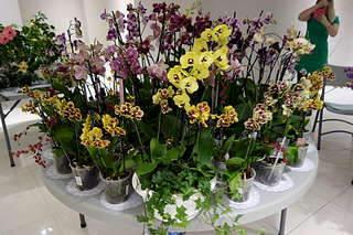 1920 X 1280 302.5 Kb 1920 X 1280 233.3 Kb 1920 X 1280 326.8 Kb Выставка-продажа редких комнатных растений в Ижевске (3-4 октября, ТЦ ФЛАГМАН).