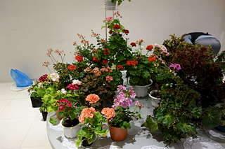 1920 X 1280 264.9 Kb Выставка-продажа редких комнатных растений в Ижевске (3-4 октября, ТЦ ФЛАГМАН).