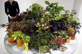 1920 X 1280 378.8 Kb 1920 X 1280 255.4 Kb 1920 X 1280 264.9 Kb Выставка-продажа редких комнатных растений в Ижевске (3-4 октября, ТЦ ФЛАГМАН).